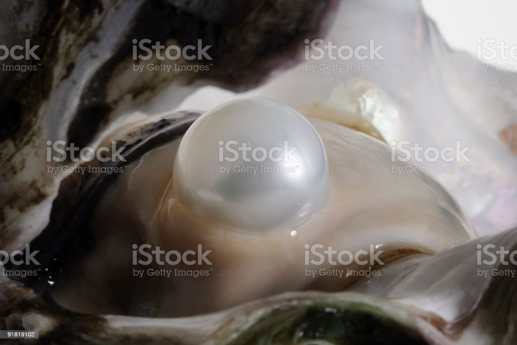 Oyster and Pearl stock photo