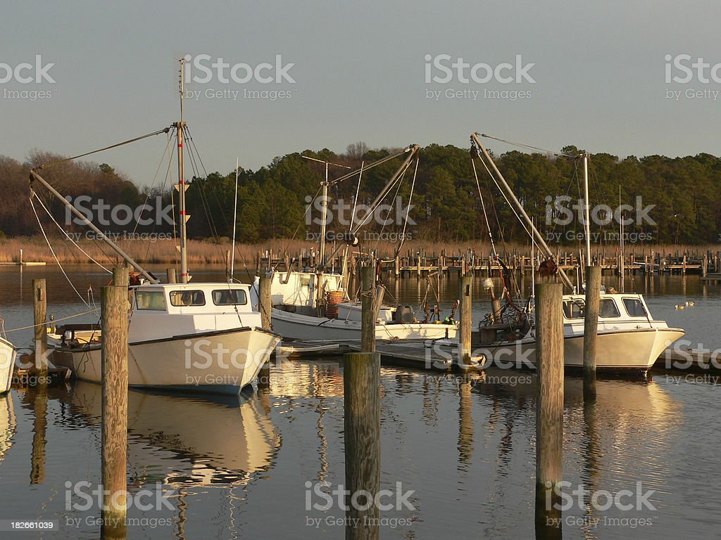 Oyster boats in the harbor royalty-free stock photo
