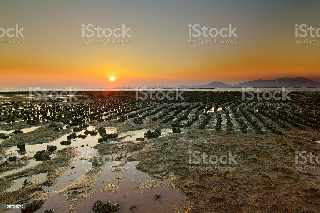 Oyster farm at sunset stock photo