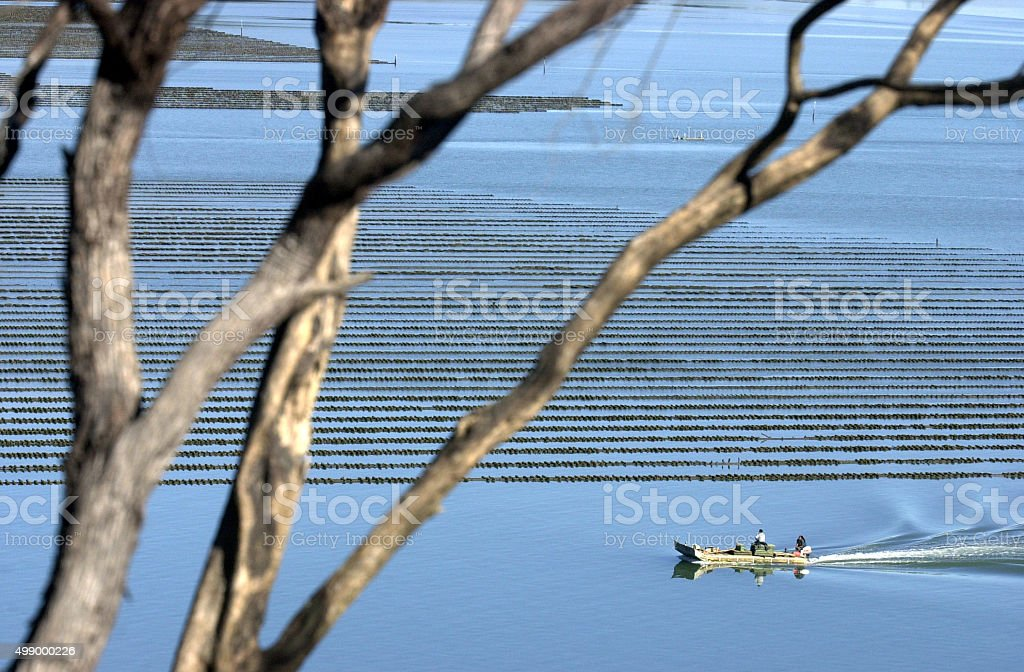 Oyster farm in Northland New Zealand stock photo