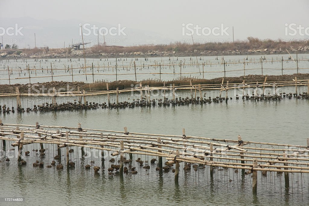 Oyster Farm in Zhuhai, China stock photo