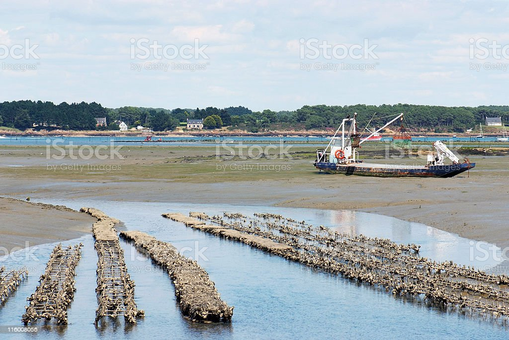 Oyster farm (Brittany - France) royalty-free stock photo