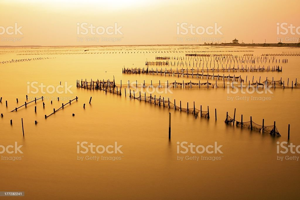 Oyster field stock photo