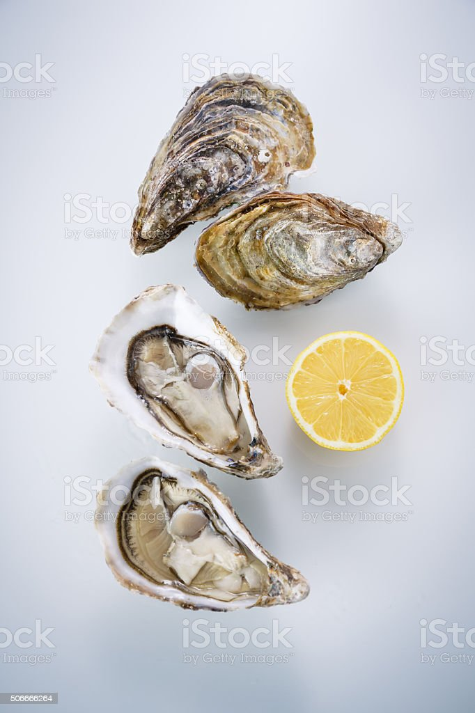 Oyster isolated on white background stock photo