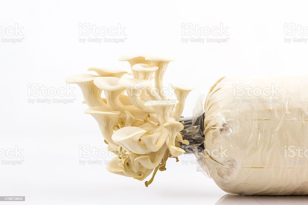 Oyster Mushroom growing on the bottle . stock photo