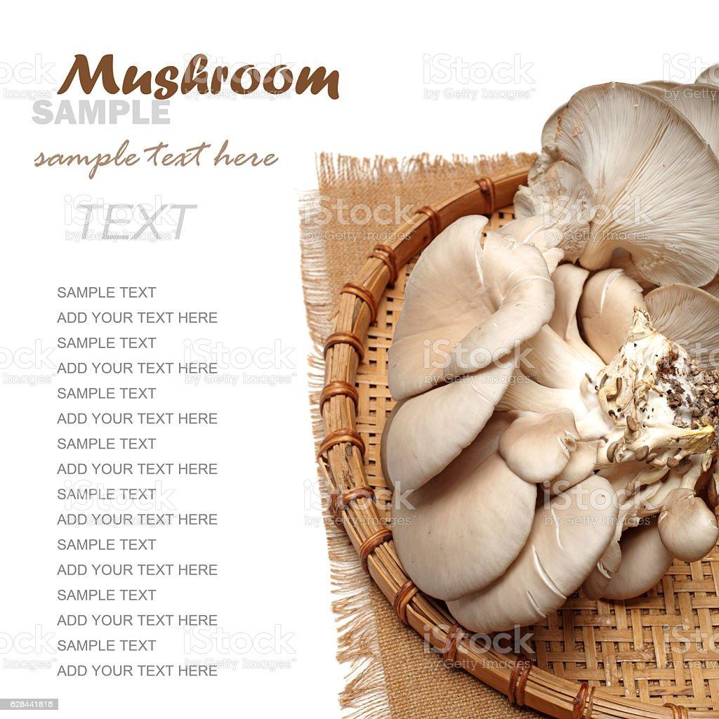 oyster  mushroom, stock photo