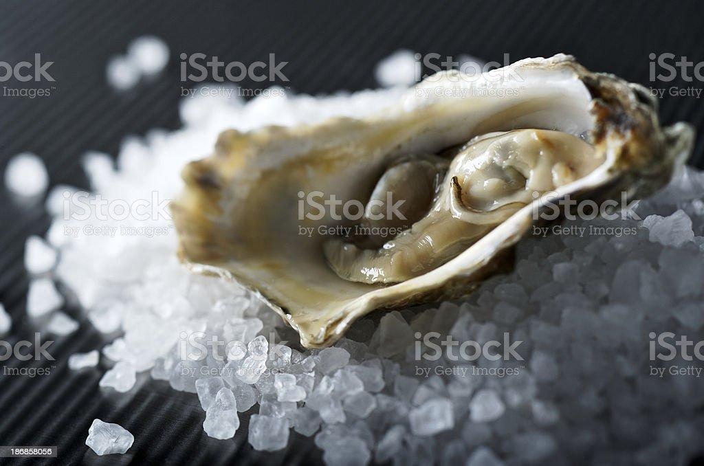 Oyster on Rock Salt stock photo