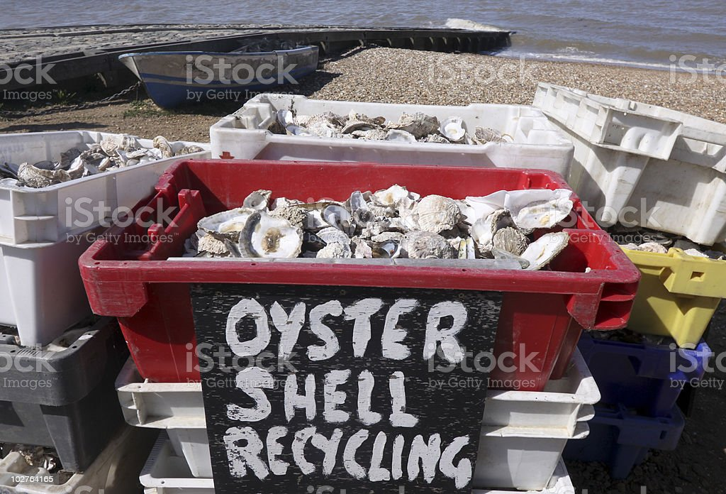 Oyster recycling in Whitstable, South East England royalty-free stock photo