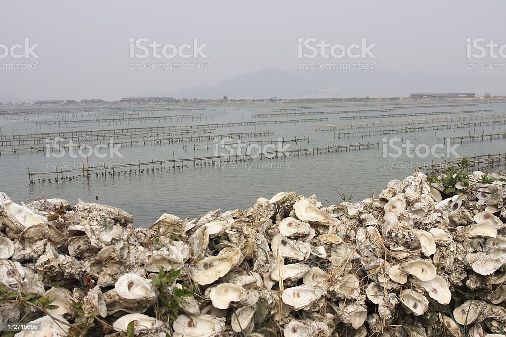 Oyster Shell Wall stock photo