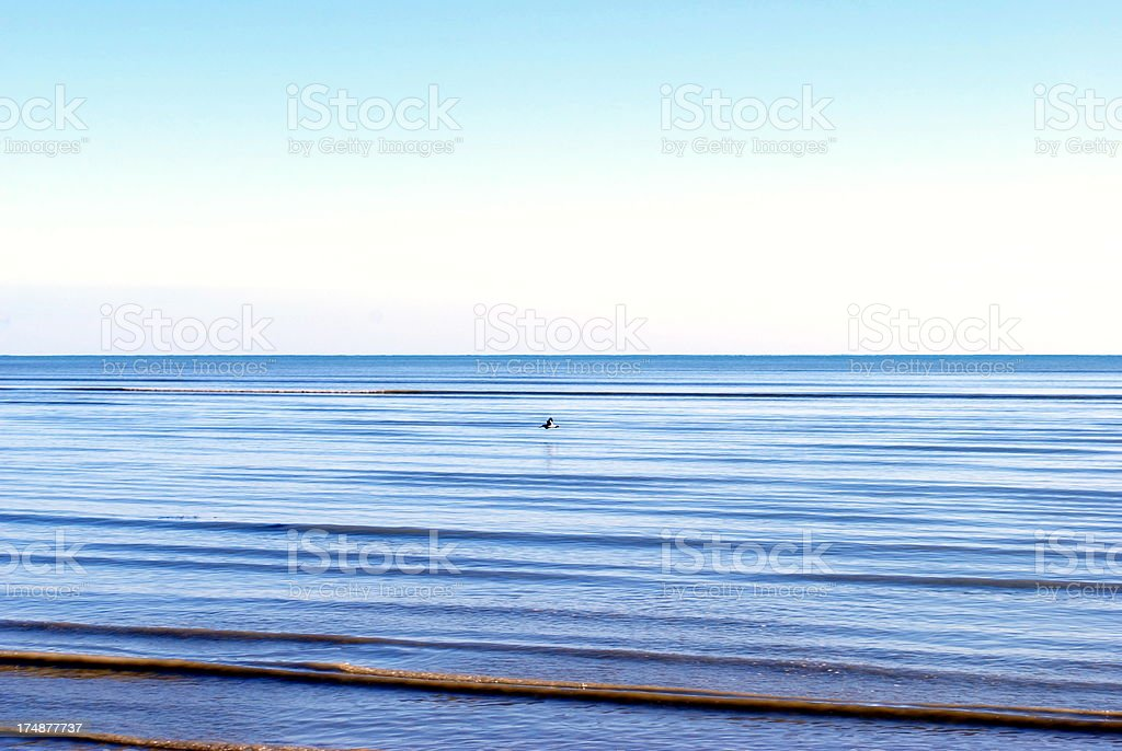 Oystercatcher flies above a seascape royalty-free stock photo
