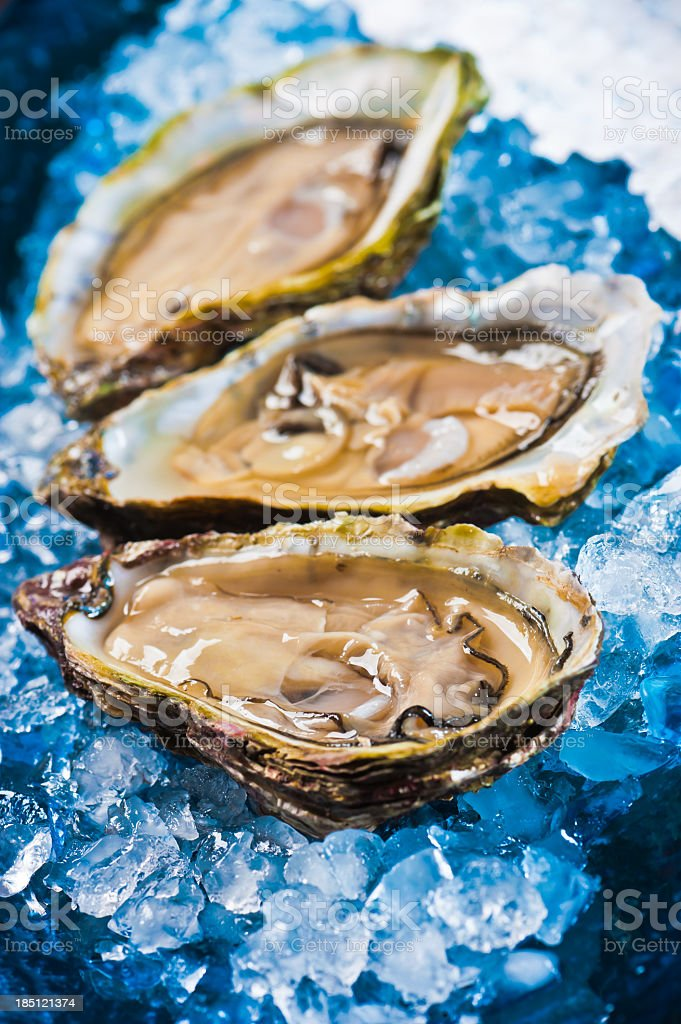 Oysters and ice. stock photo