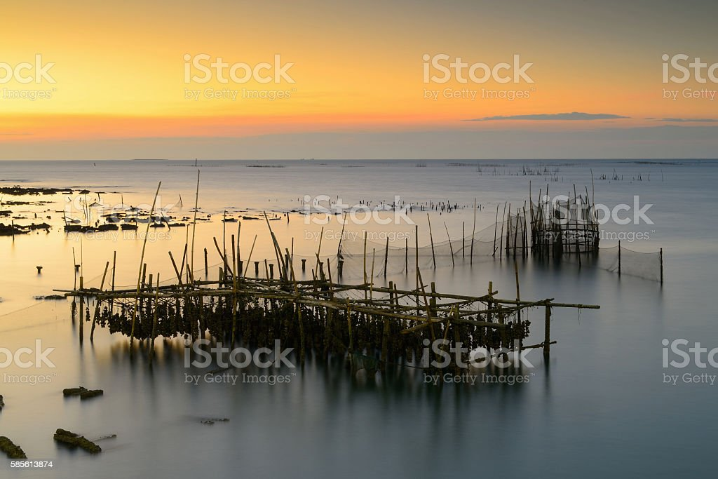 Oysters and wooden stock photo