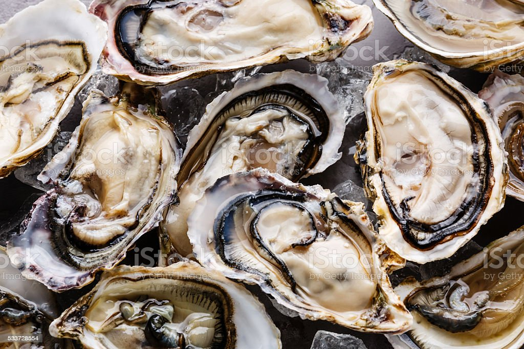 Oysters background stock photo