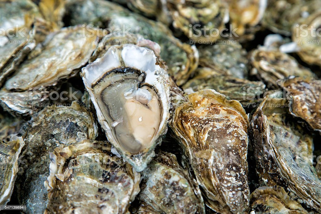 Oysters background with Open Oyster stock photo