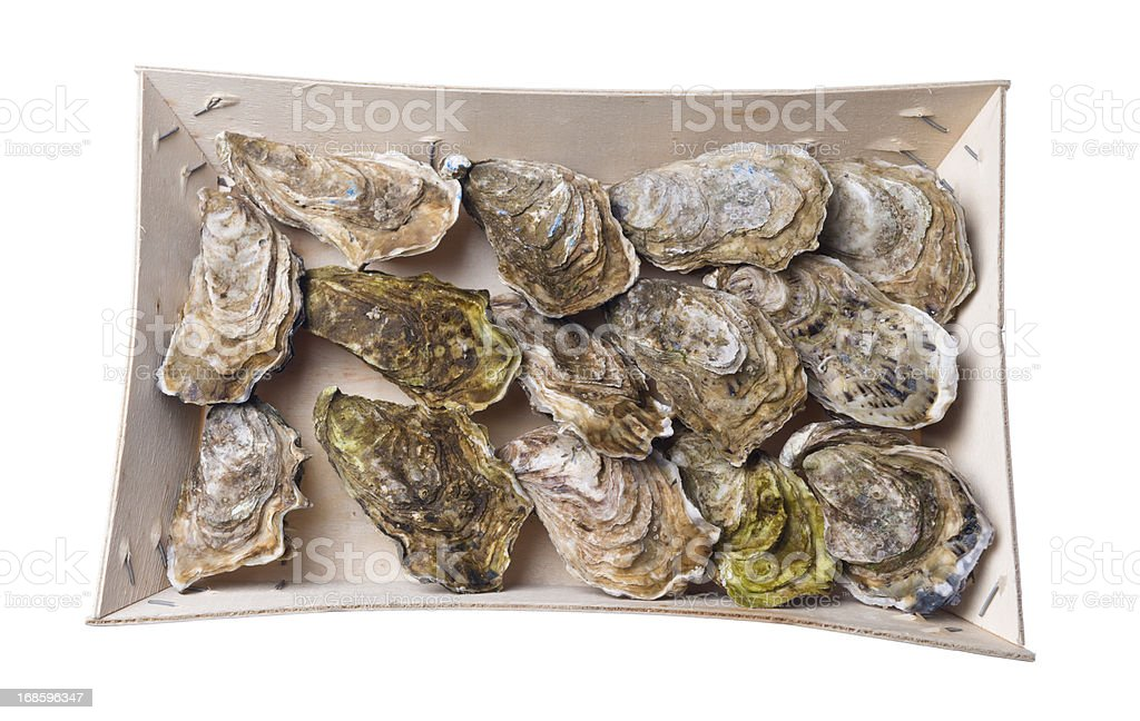 Oysters in a box royalty-free stock photo