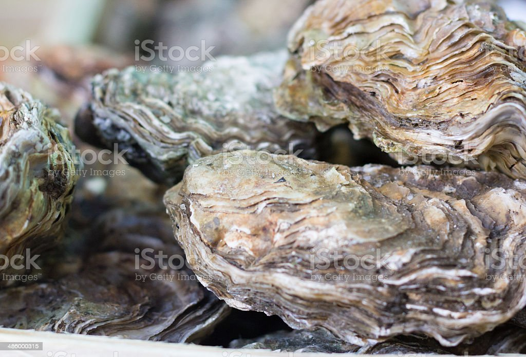 Oysters in Borough Market, London royalty-free stock photo