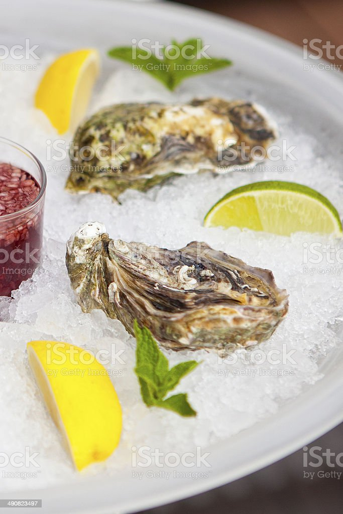 Oysters in ice royalty-free stock photo