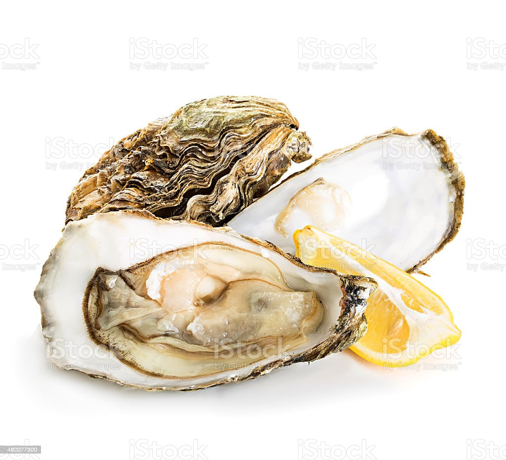 Oysters isolated on a white background stock photo