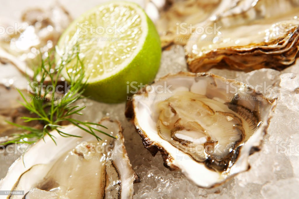 Oysters on the half shell over ice royalty-free stock photo