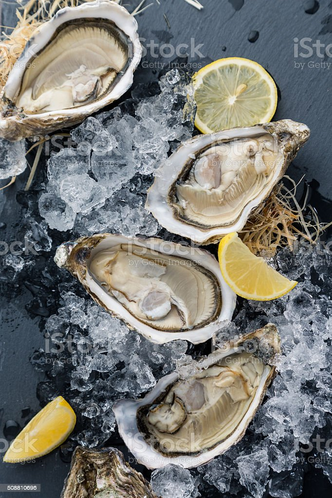 Oysters on the ice and lemon stock photo
