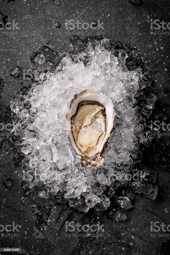 Oysters on the ice stock photo