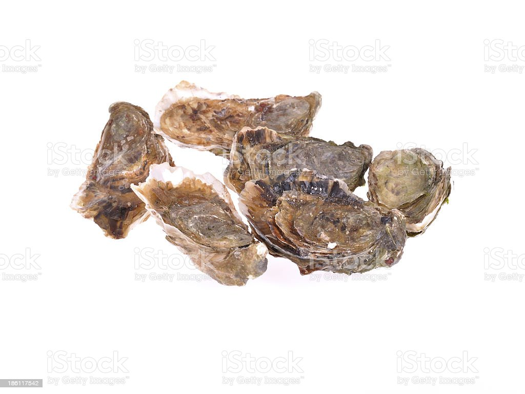 oysters on white background stock photo