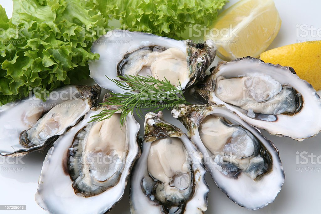 Oysters on white plate stock photo