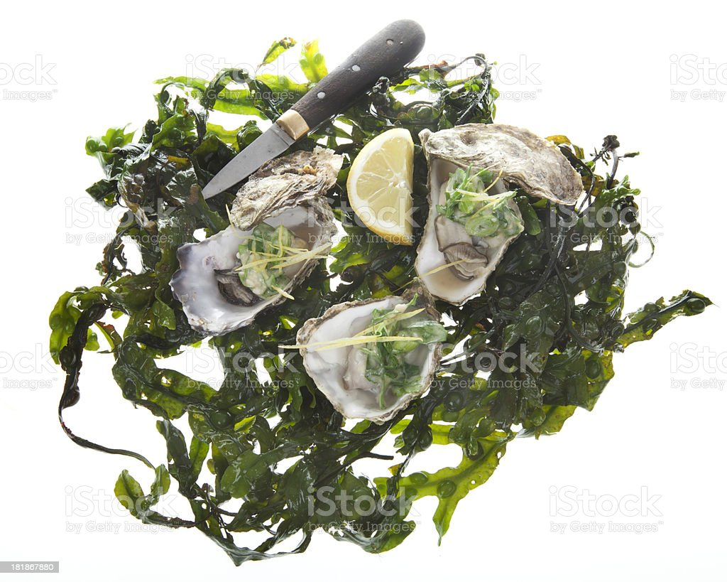 oysters royalty-free stock photo