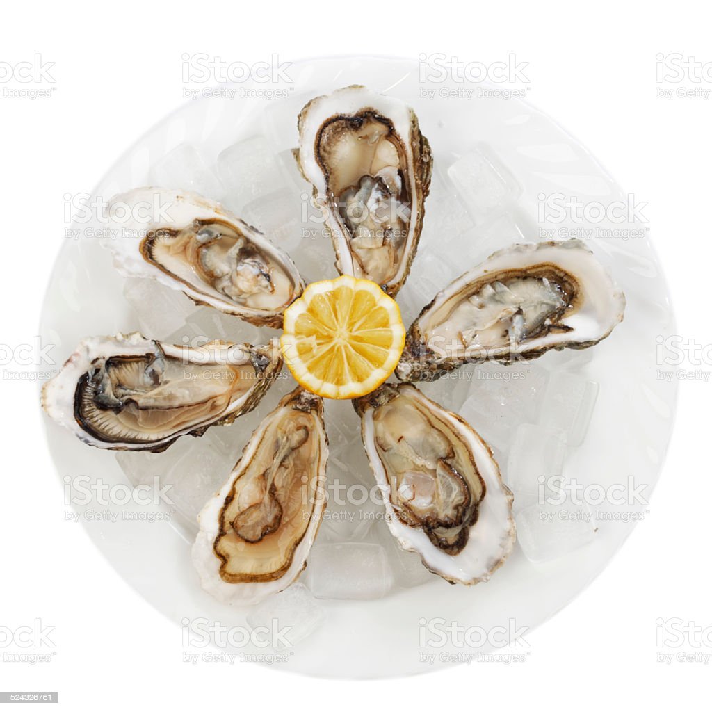 Oysters with lemon stock photo