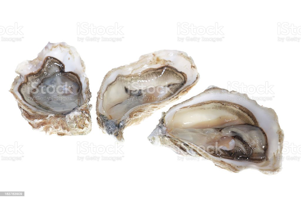 Oysters with meat on the inside stock photo