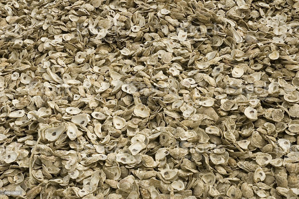 oysters1 stock photo