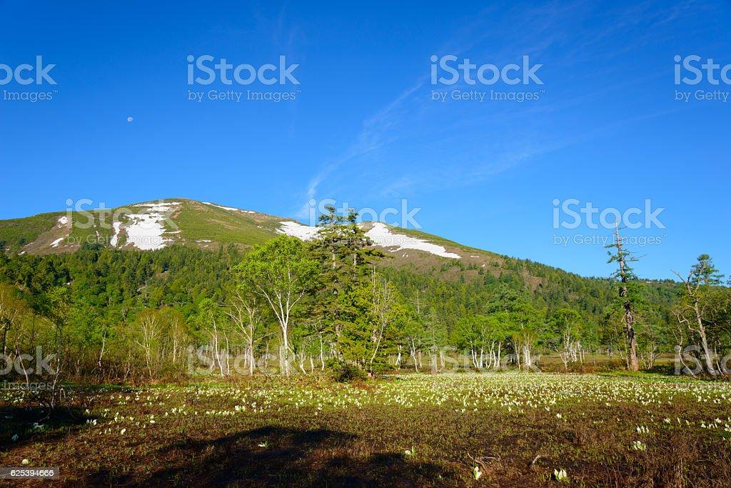 Ozegahara and Mt. Shibutsu in early summer in Gunma, Japan stock photo