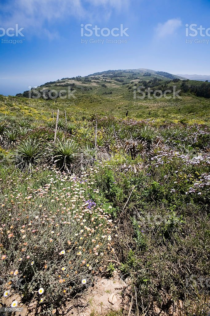 Pacific Coast Countryside, Chile stock photo
