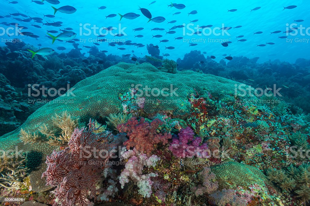 Pacific Coral Reef stock photo