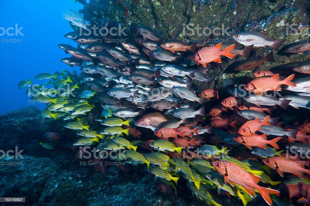 Pacific fish mix stock photo