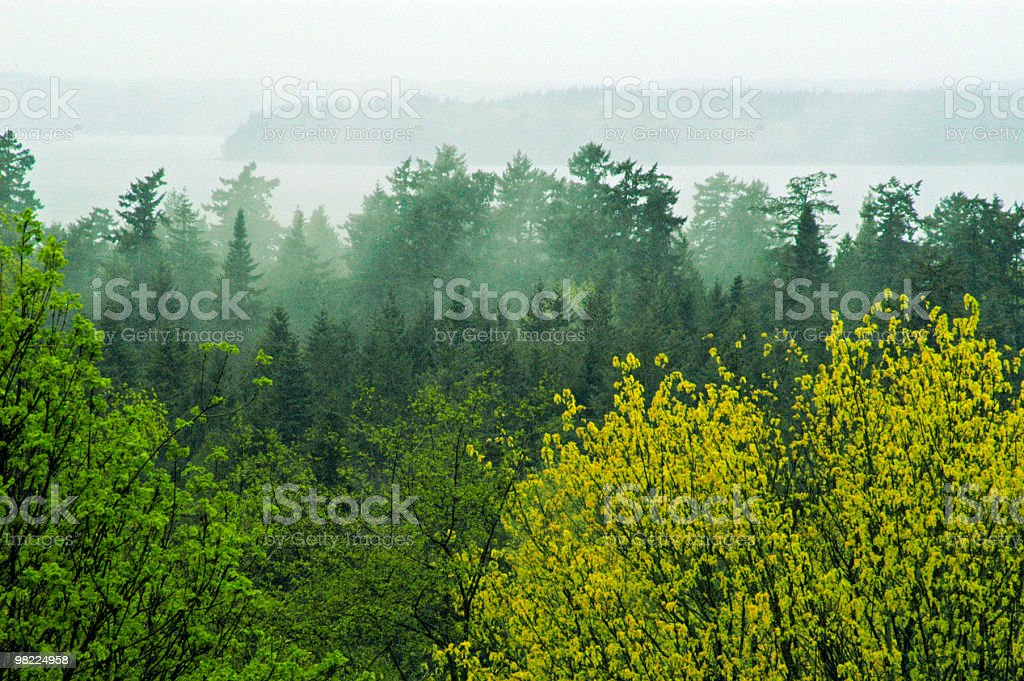 Pacific Northwest Afternoon stock photo