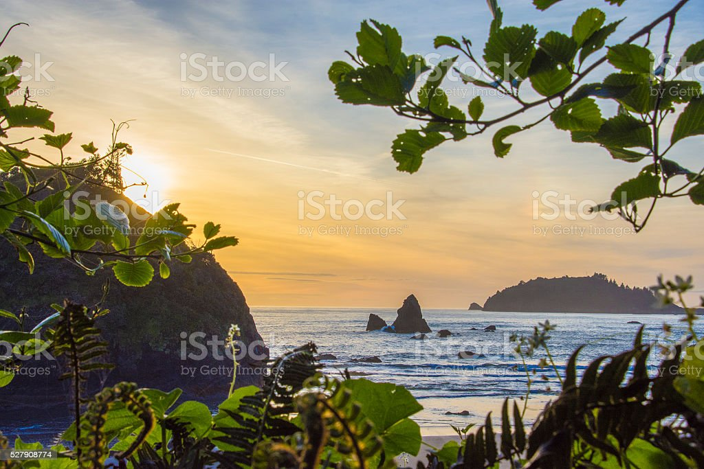 Pacific sunset through leaves stock photo