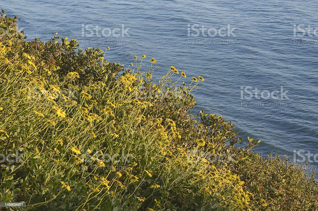 Pacific Wildflowers royalty-free stock photo