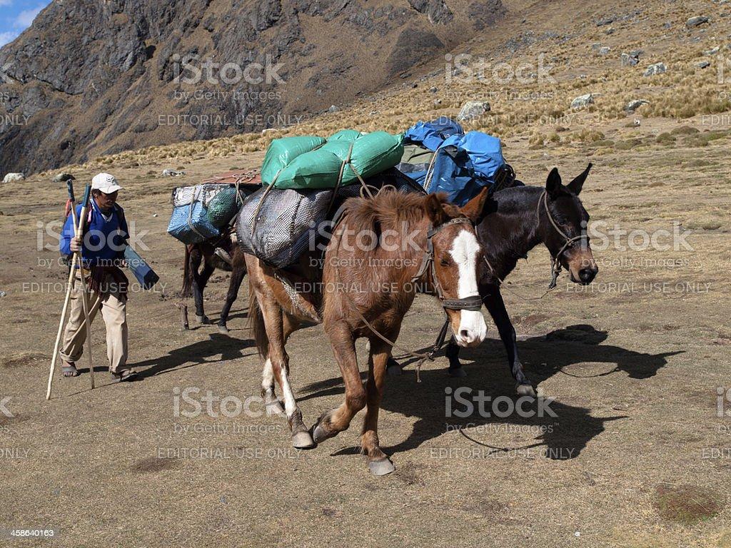 Pack Horses on the Salcantay Trail, Peru stock photo