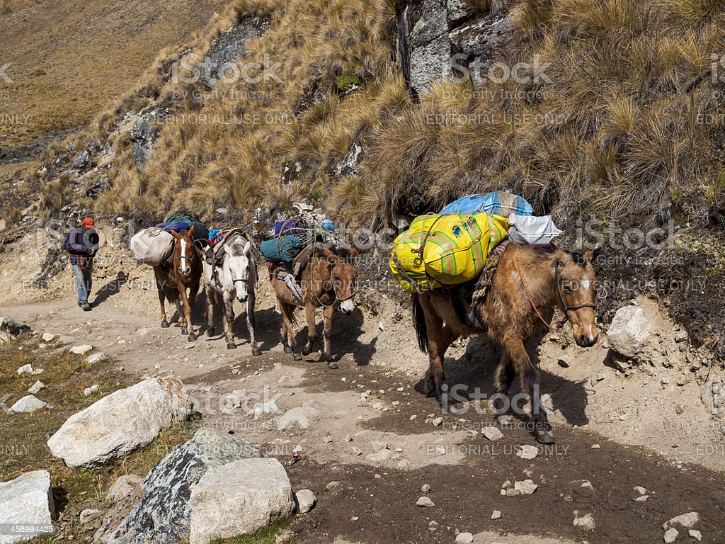 Pack Horses on the Salcantay Trail, Peru stock photo