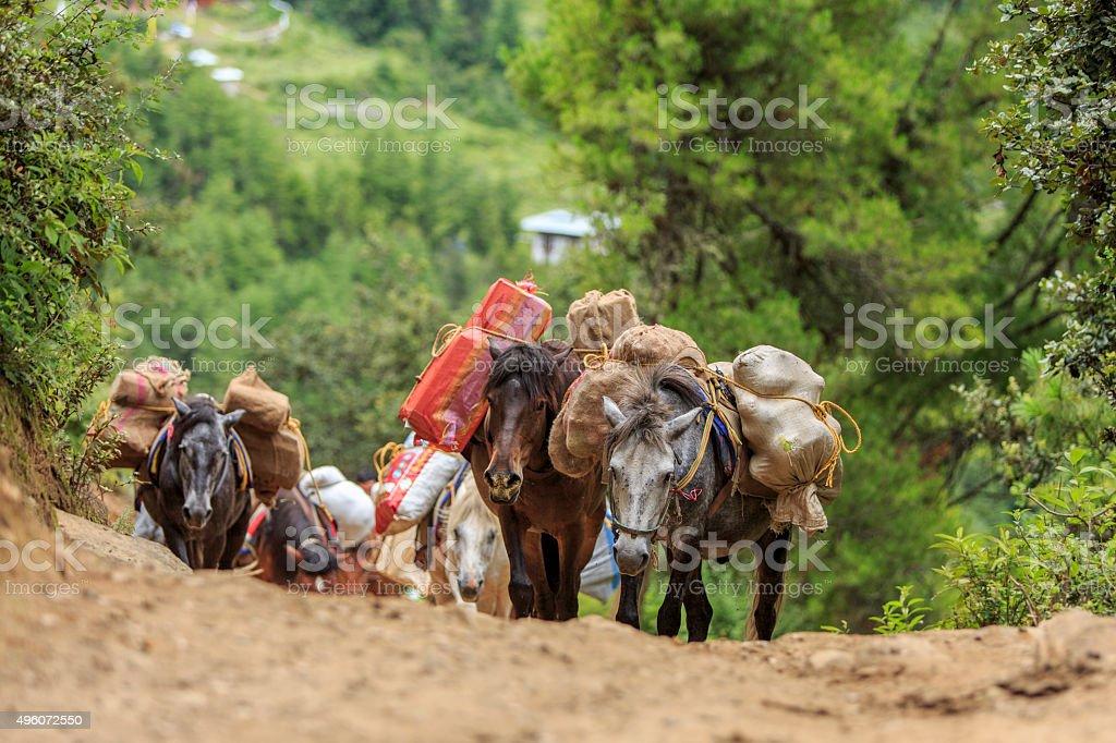 Pack Horses stock photo
