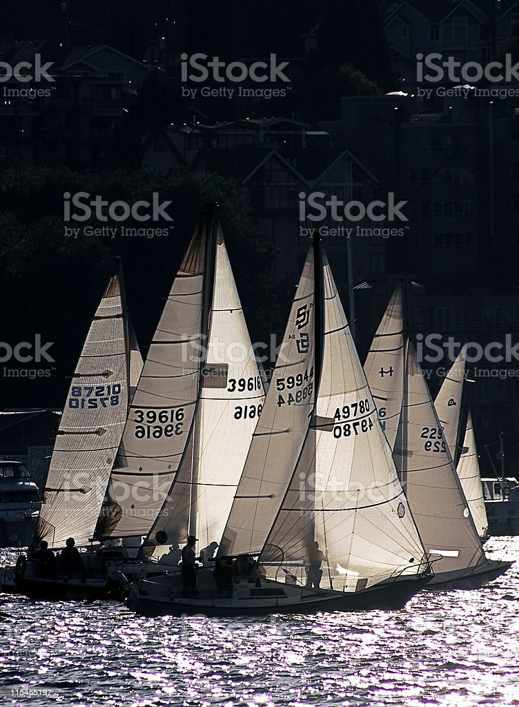 Pack of Wild Sailboats royalty-free stock photo