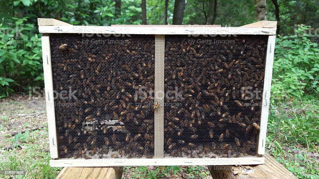 Package of Honey Bees stock photo