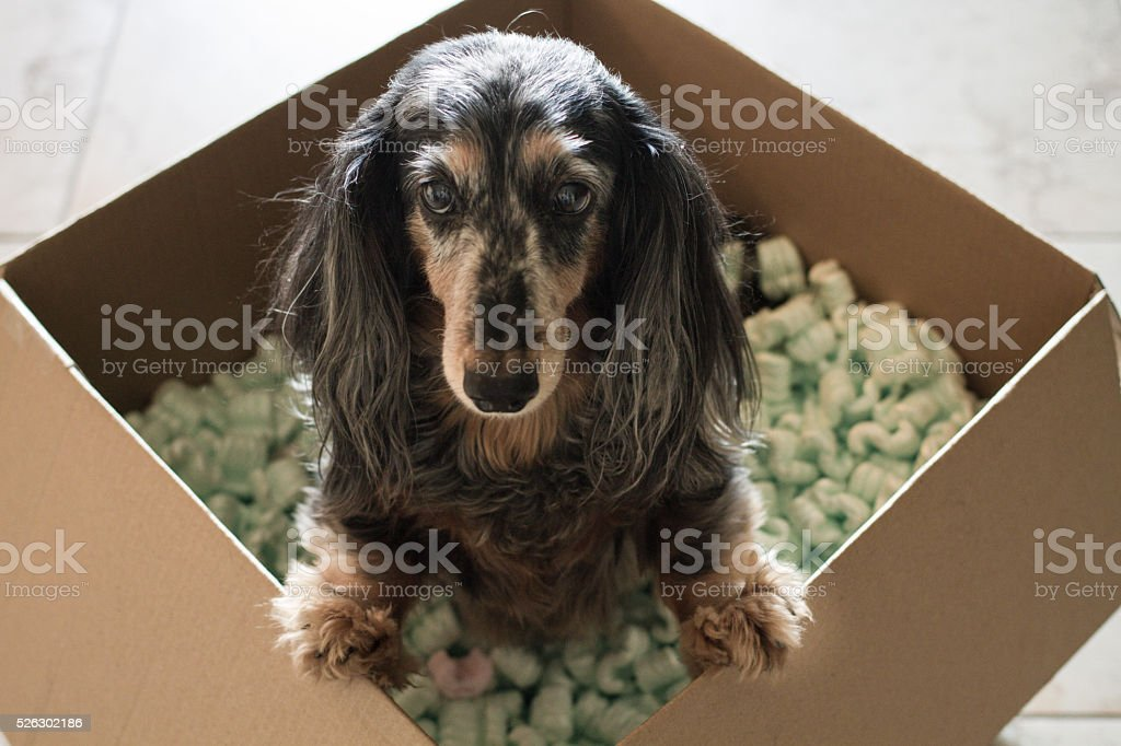 Packing the Dog stock photo