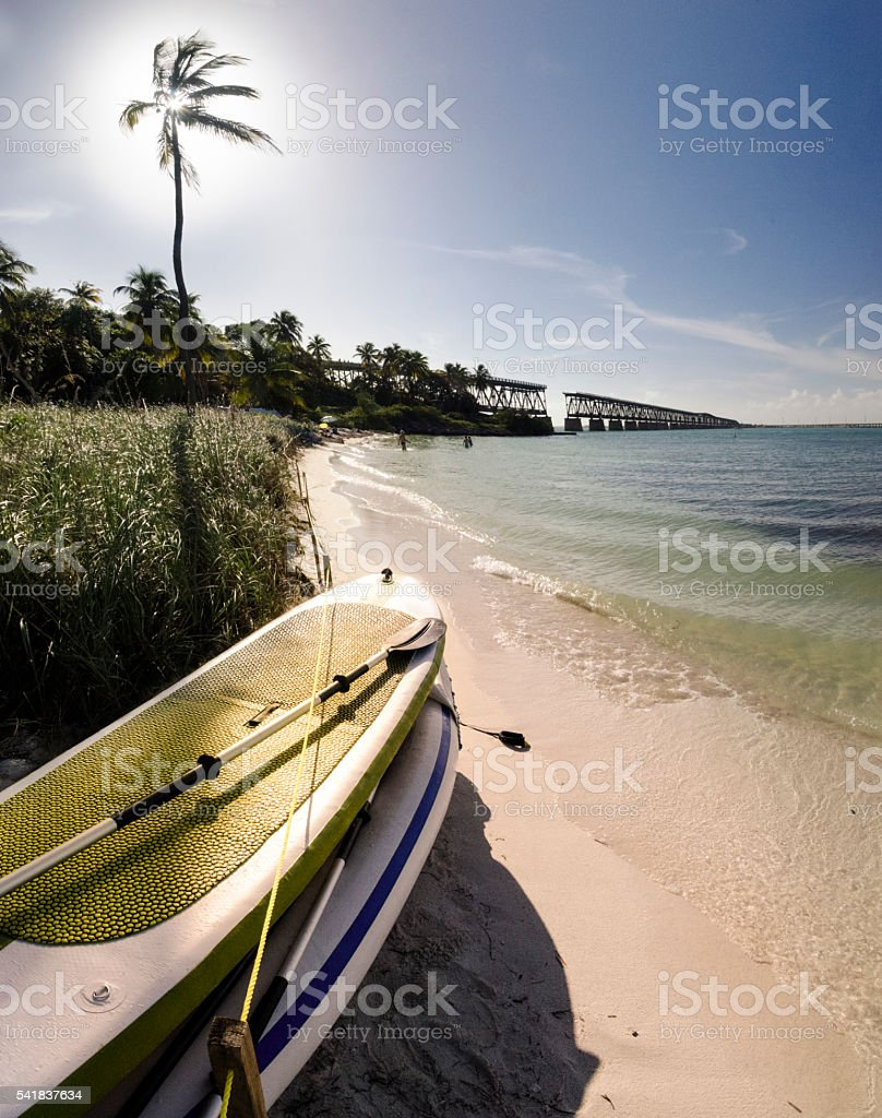 Paddle Boards Under a Palm stock photo