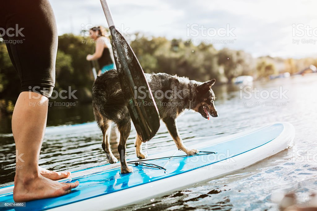 Paddleboarding Woman With Dog stock photo