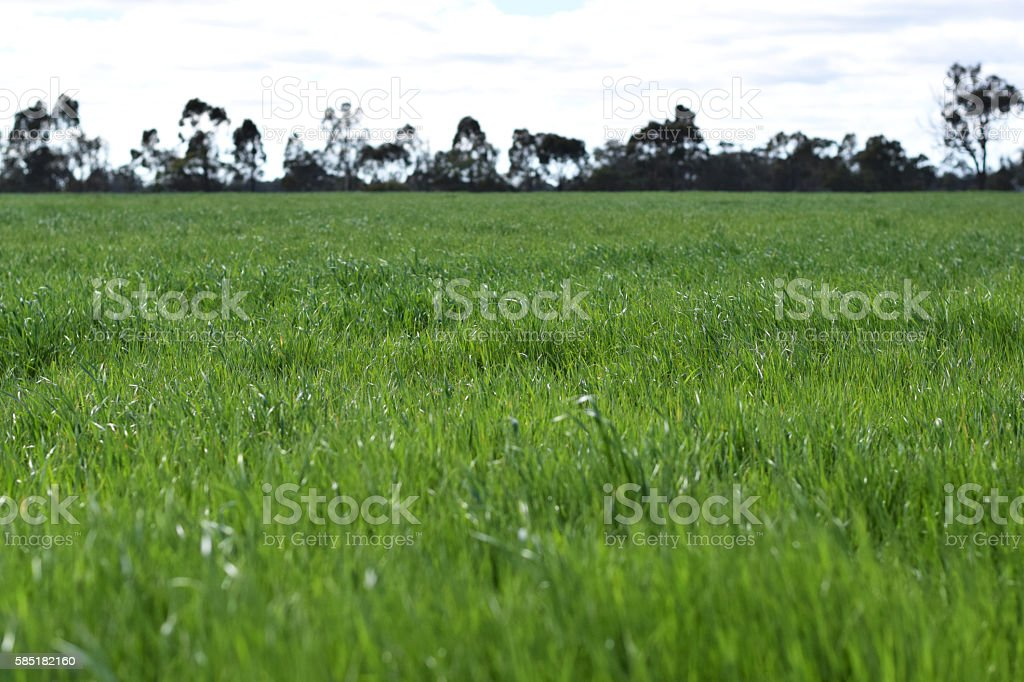 Paddock of grass stock photo