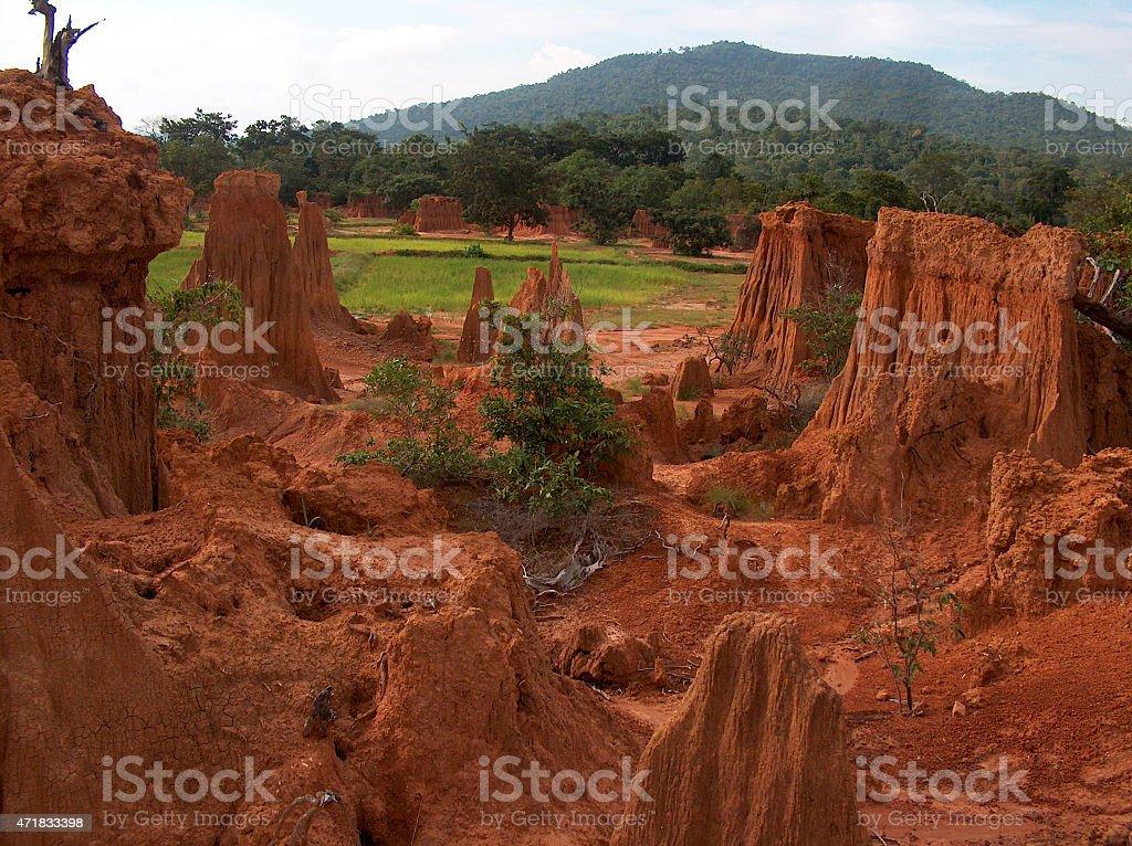 paddy campo de Sa Keaw provincia en Tailandia foto de stock libre de derechos