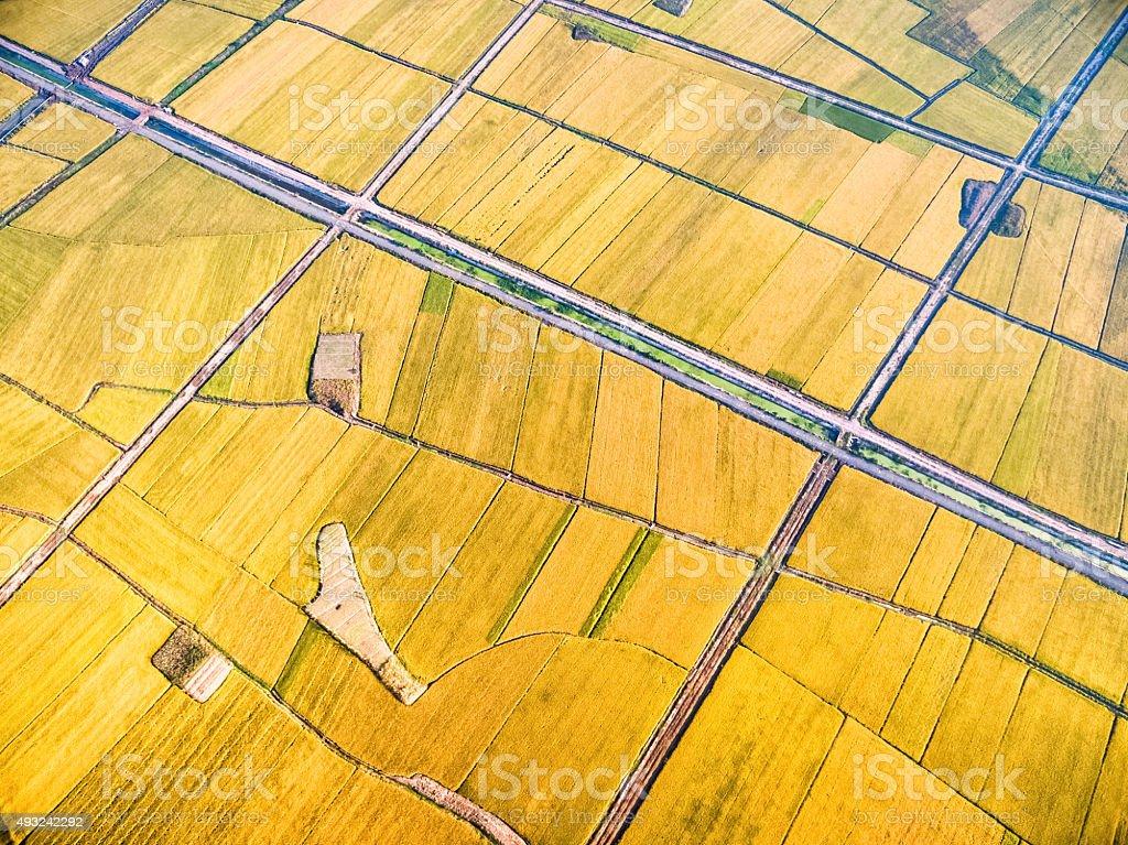 paddy fields in autumn stock photo
