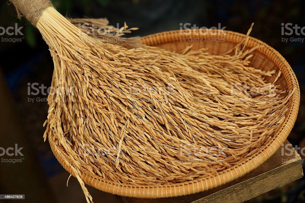 Paddy  in wicker bamboo basket, stock photo